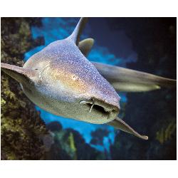 Aquarium de Lyon E Billet à date libre 1 jour Enfant