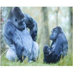 Vallée des singes Enfant E-BILLET
